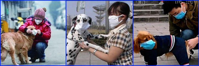 Chuyện lạ có thật: Trung Quốc ô nhiễm tới mức chó cũng phải đeo khẩu trang